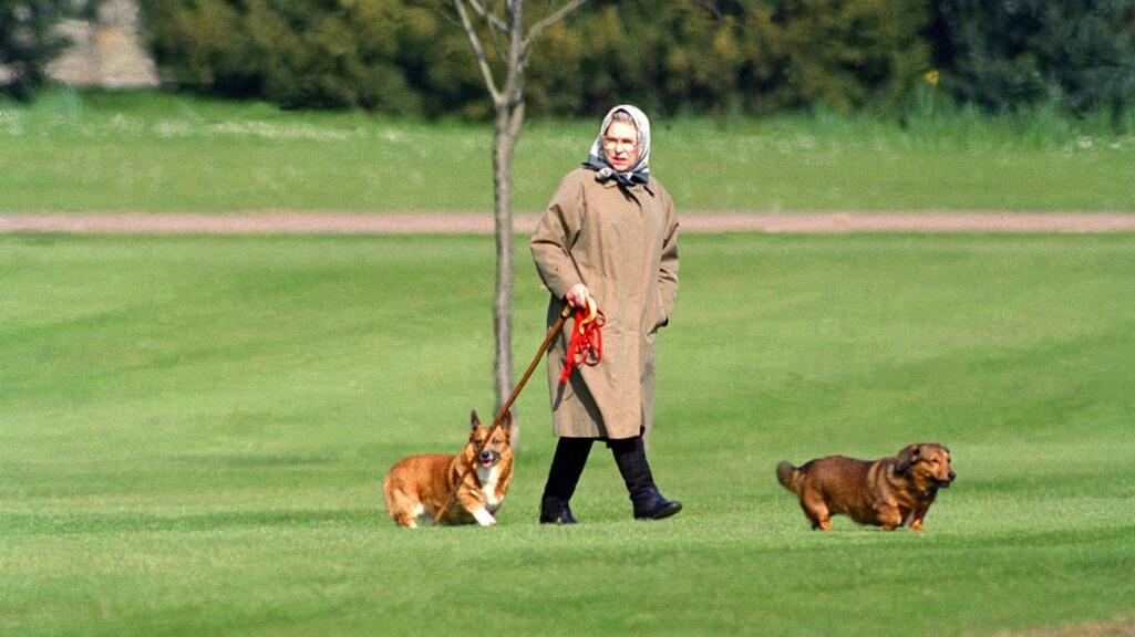 Queen Elizabeth met haar honden