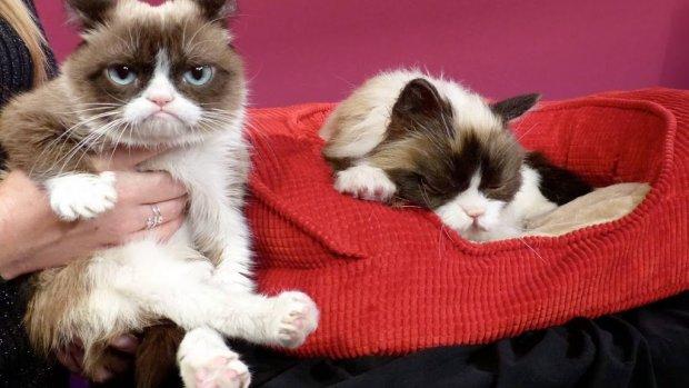 Grumpy Cat is niet meer!
