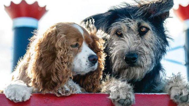 Disney strikt asielhond voor remake Lady en De Vagebond