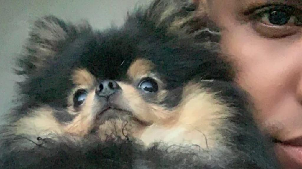 Mysterie hondje Lil' Kleine en Jaimie Vaes ontrafeld